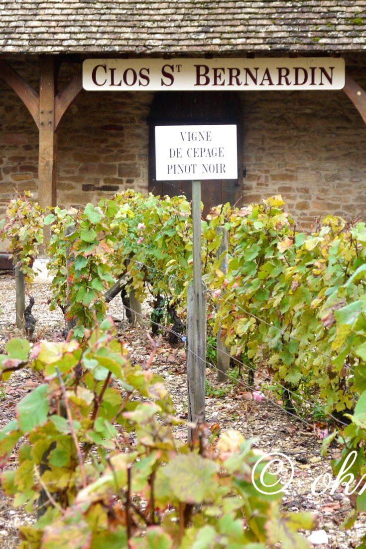 ブルゴーニュのブドウ畑